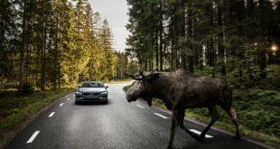 Volvo-S90-Large-Animal-Detection-
