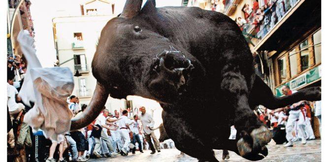 bull-1