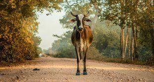 Investigadores brasileros desarrollaron un método para evitar colisionar con animales salvajes en las rutas